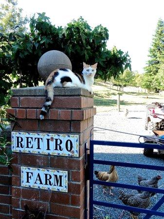 Retiro Park Lodge : Sweetest farm kitty