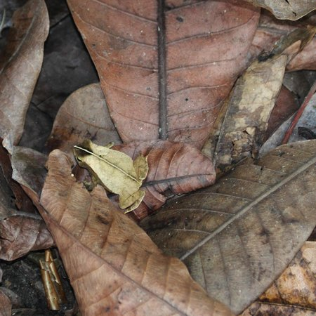 Gamboa Rainforest Resort: Can you spot the frog?  We didn't until he jumped.