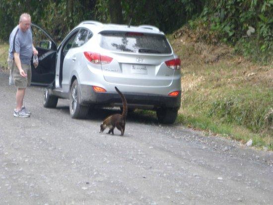 La Mesa de Mamá: Tried to get in the car!