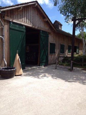Disney's Davy Crockett Ranch: horse rides