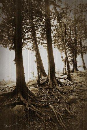 Bruce Peninsula National Park : Roots around Cyprus lake