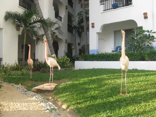 Pueblo Bonito Los Cabos: Flamingos on the grounds