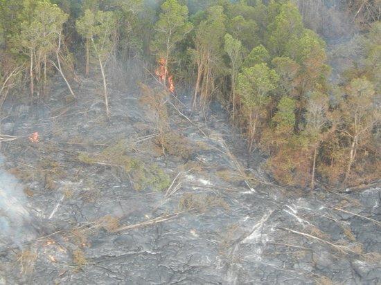 Blue Hawaiian Helicopters - Hilo : Underground Lava Burning Trees