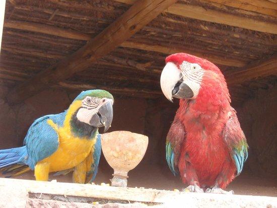 Ccochahuasi Animal Sanctuary: Guacamayos selvàticos