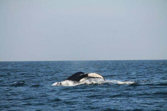 Nayarit, Meksika: Whales along the way