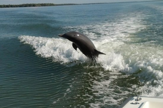 Everglades Fishing Charters: Love watching the dolphin play behind the boat