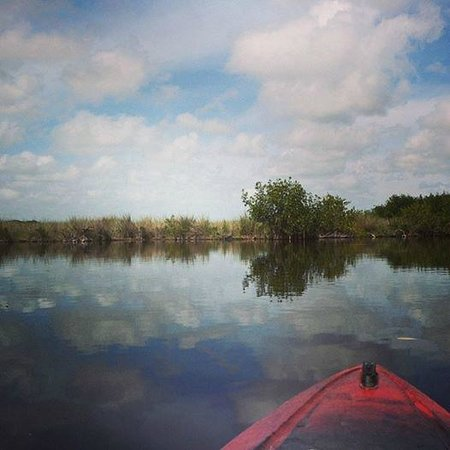 Tour The Glades - Private Wildlife Tours : Like a painting.
