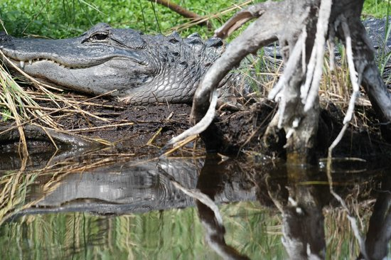 Tour The Glades - Private Wildlife Tours : This is with a zoom lens :)