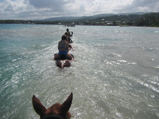 Hooves - Guided tours on horseback: Look how deep we went in the water!