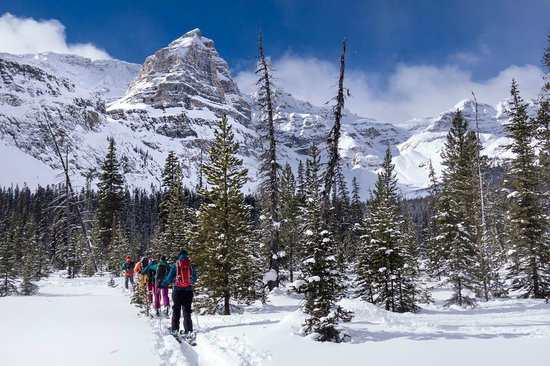 HI-Castle Mountain Wilderness: Ski touring at Chickadee Valley, just 10km from the hostel