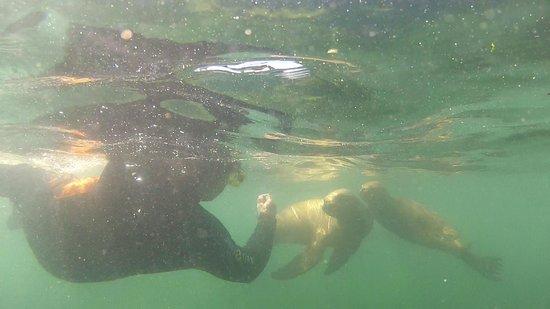 Lobo Larsen: Snorkel con Lobos