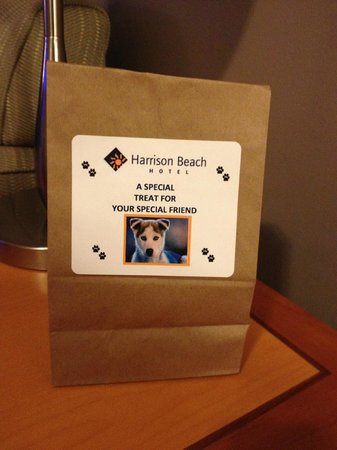 Harrison Beach Hotel: a special surprise for our fur baby