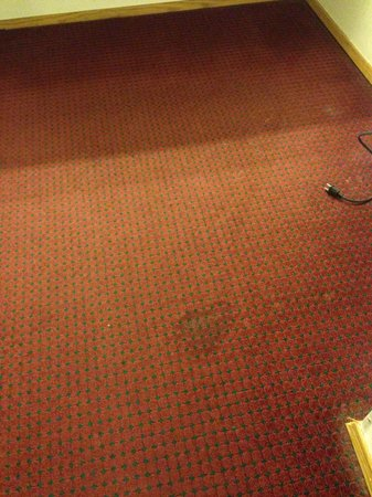 Quality Inn: Look at the carpett!!!