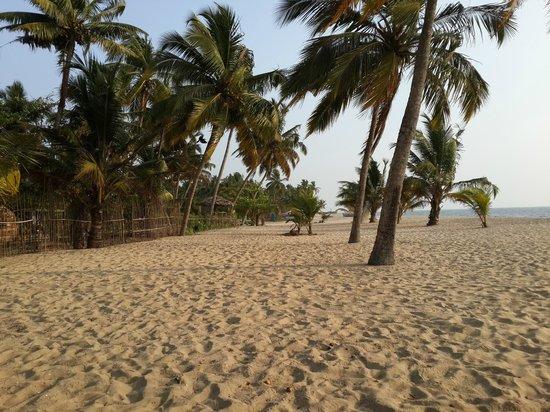 Abad Turtle Beach : Private Beach