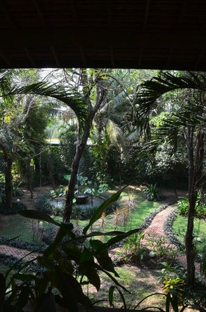 Amatao Tropical Residence : Sunshine through the tree
