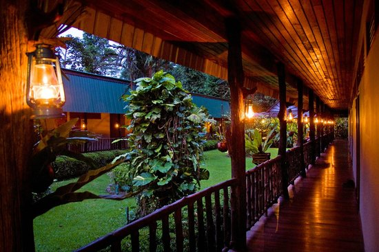 Sukau Rainforest Lodge: At dusk, the rainforest comes alive!