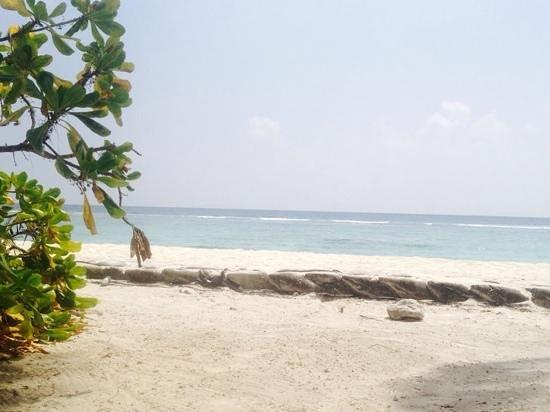 Ripple Beach Inn Photo
