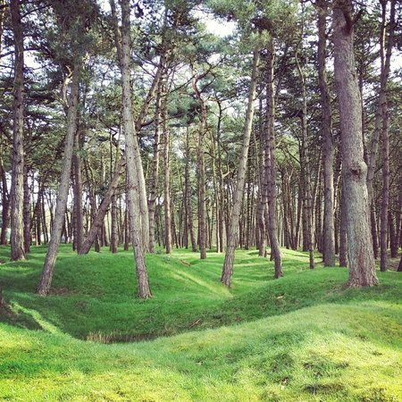 Mémorial de Vimy : Woods planted in mid twenties covering trenches and craters