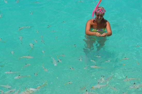 Aitutaki Lagoon Resort & Spa : Fish feeding time