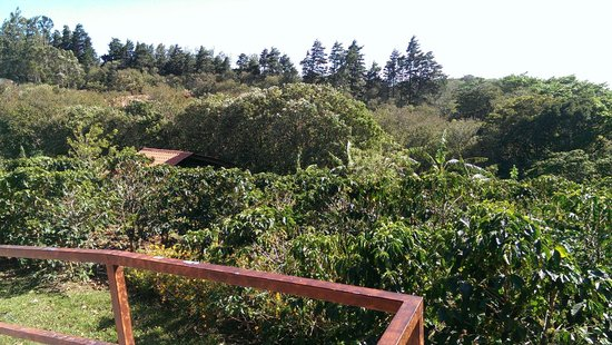 Don Juan Coffee Tour : View of plantation