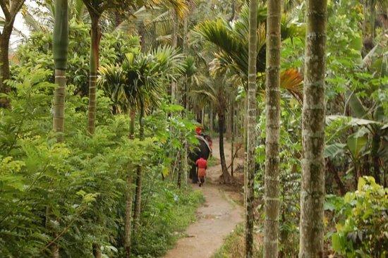 Cardamom County: Elephant safari through spice plantation