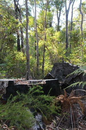 Wharncliffe Mill: Surrounding bushland