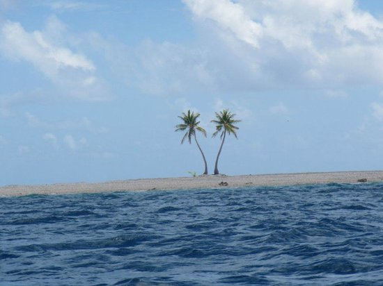 Tokelau: Lone coconut palms