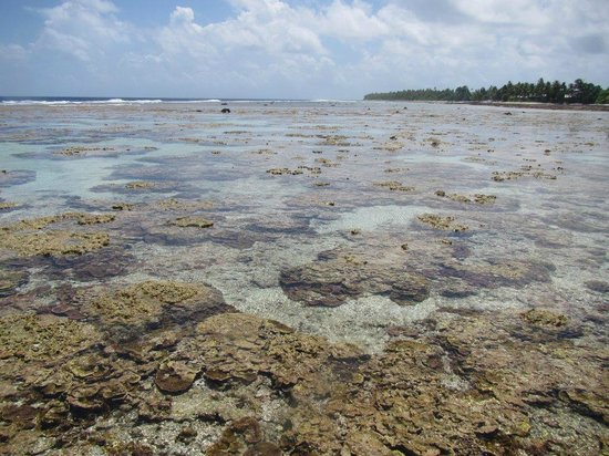 Tokelau: The reef-flat at low tide