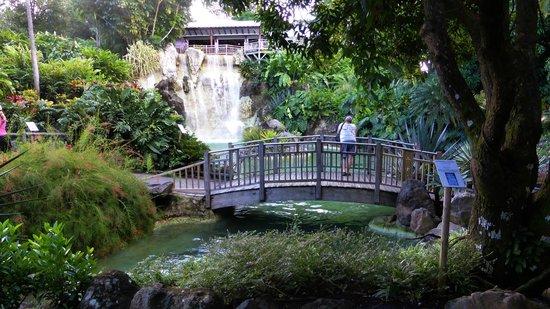 Jardin Botanique de Deshaies : Détente et relaxation