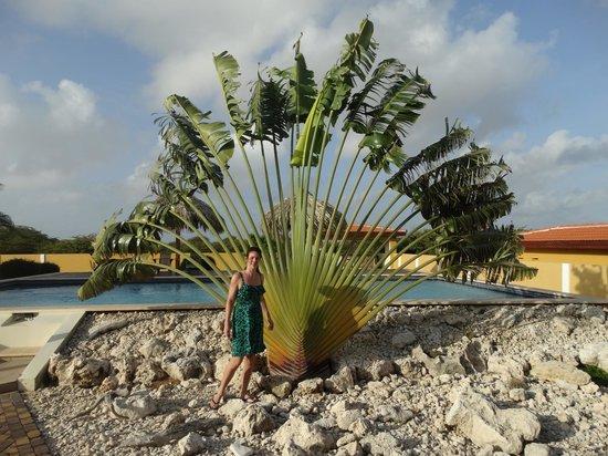 Wanapa Lodge: mooie aangelegde tuin met veel Kolibri's