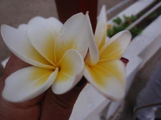 Discovery Kartika Plaza Hotel: Belle fleure