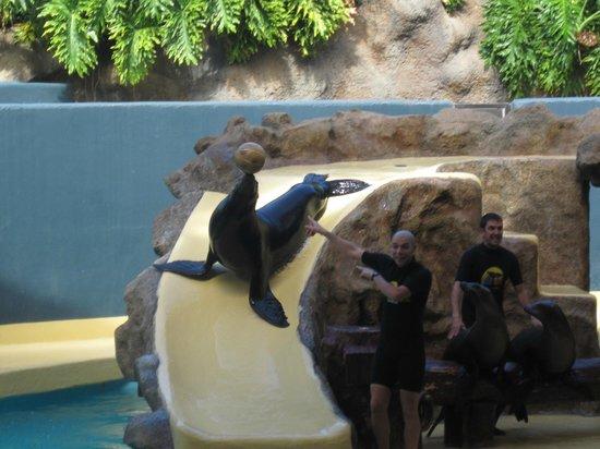 Loro Parque : sealions was hilarious