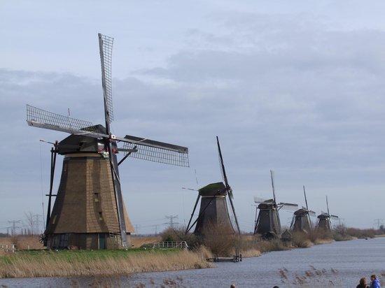 Réseau de moulins de Kinderdijk-Elshout : Vu depuis le seul chemin ouvert . Un bel enemble quand meme !!!