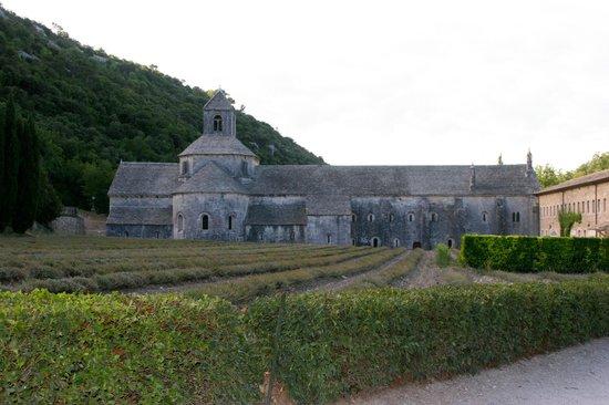 Abbaye Notre-Dame de Sénanque : Dans un champ de lavande