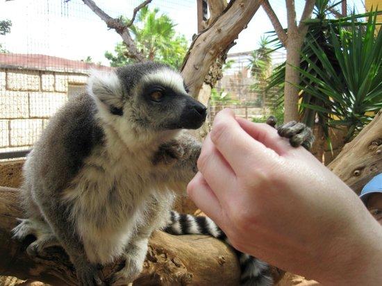 Monkey Park : hand in hand