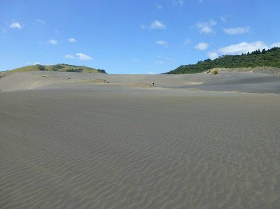 Bethells Beach: to the top