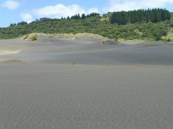Bethells Beach: black dunes