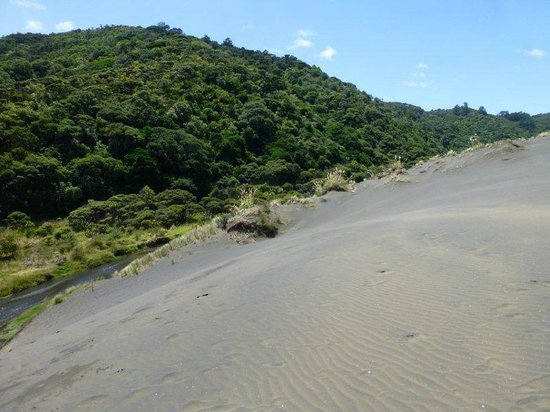 Bethells Beach: the lake walk starts at the bottom left of here