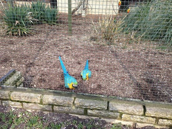 Beale Park: Blue and Gold Macaw