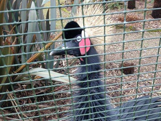 Beale Park: Bird