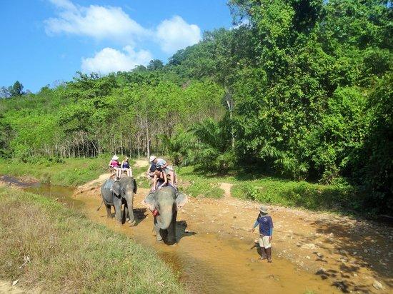 Khao Sok Tree House Resort: balade a dos d'éléphant