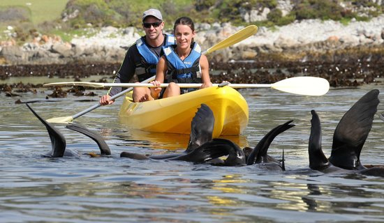 Mountain View Manor Guesthouse, Sandbaai : Kyaking with the Walker Bay Adventures watching the cape fur seals