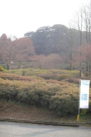 Kurume Forest Tsutsuji Park : 冬なので