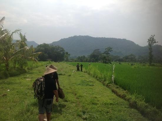 Green Kitchen: the fields