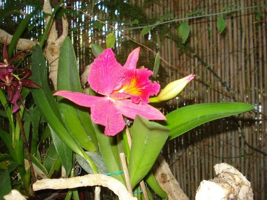 Jardín de Orquídeas de Sitio Litre: The Orchid Garden Tenerife
