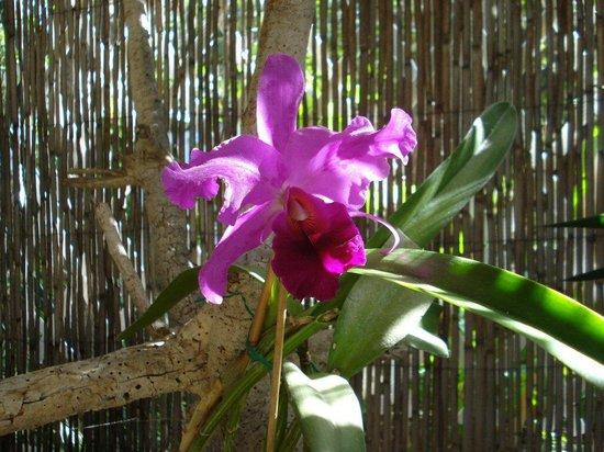 Jardín de Orquídeas de Sitio Litre: The Orchid Garden