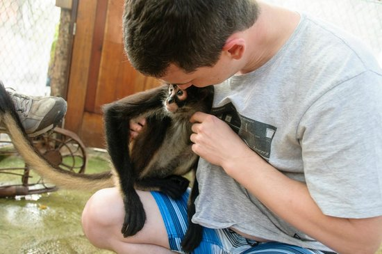 Riviera Adventours: lala the resident spider monkey