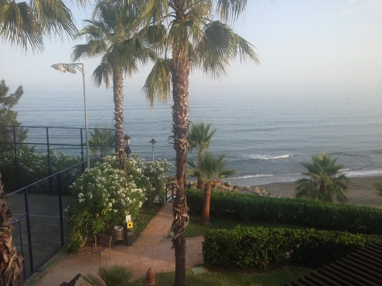 H10 Estepona Palace: Palm trees at the hotel