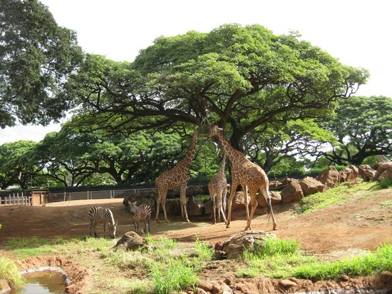 Honolulu Zoo: African enclosure