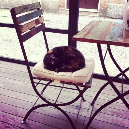 Trattoria le Nuvole : Esterno con gatto....